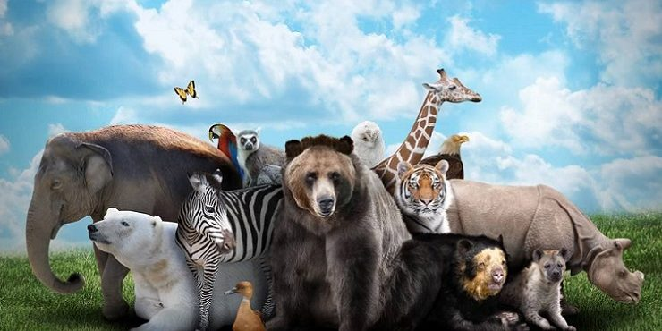 Image shows humankind's best friends, the animals