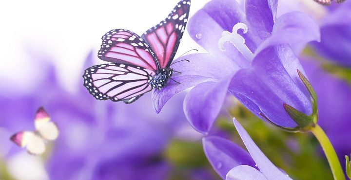 Image shows a lovely butterfly on a flower symbolizing affirmations for ascension.