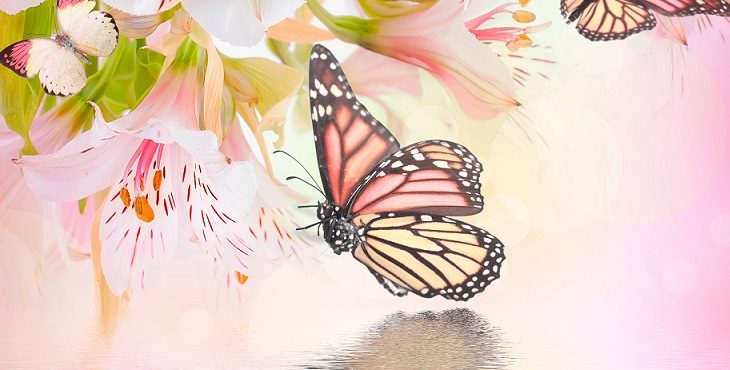 Image of the butterfly symbolizing the transformation of the planet. Aligning With Earth