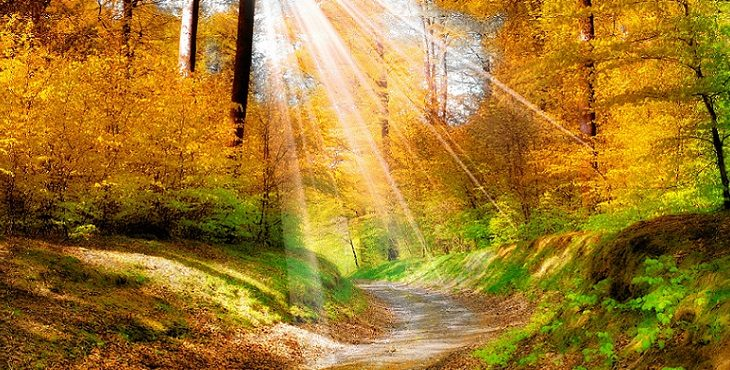 Image of sunlight illuminating a peaceful forest. Earth Changes Ahead