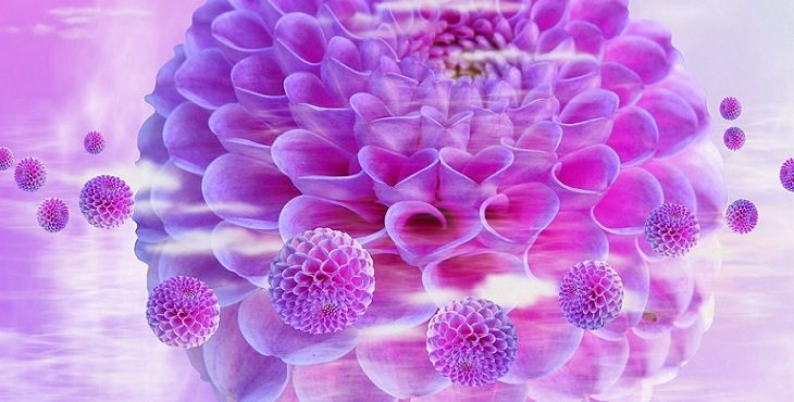 Image of pale pink dahlias. The Ascension Process - Part 2