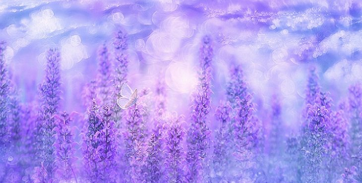 Image of lavender orbs and a sweet butterfly sitting on violet sage plants. Attaining A Fifth Dimensional Awareness