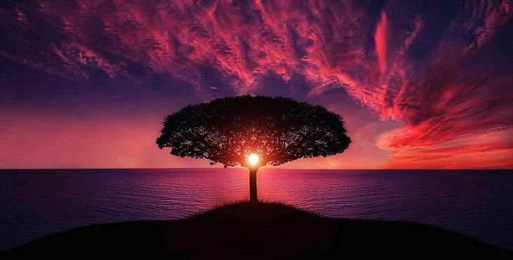 Image of a breathtaking sunset with the sun enclosed in the circle of the tree. Light Wave Archive #3