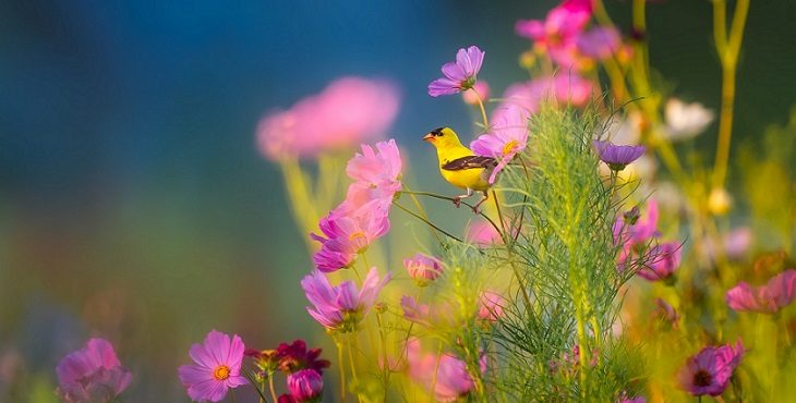 Image of a yellow bird among pinkish lavender flowers. Transcending The Seven Forms Of Seduction