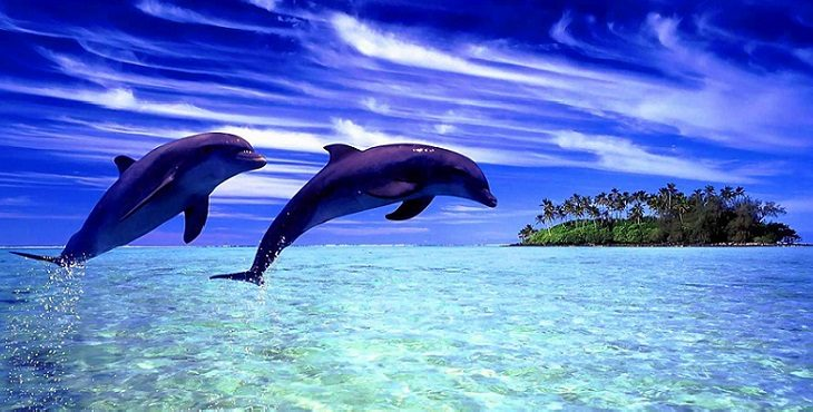 Image of two dolphins jumping in the air with a small island and aquamarine, sparkling water in the background. The Peace Within
