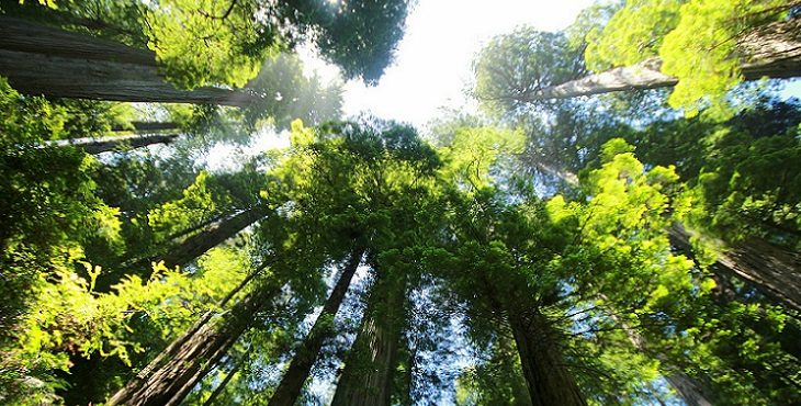 Image of the Redwood Trees. Blessings for Entering the Void of Infinite Possibility