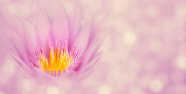 Image of a beautiful pink lotus with sparkling orbs surrounding it. The Nature of Divine Relationship