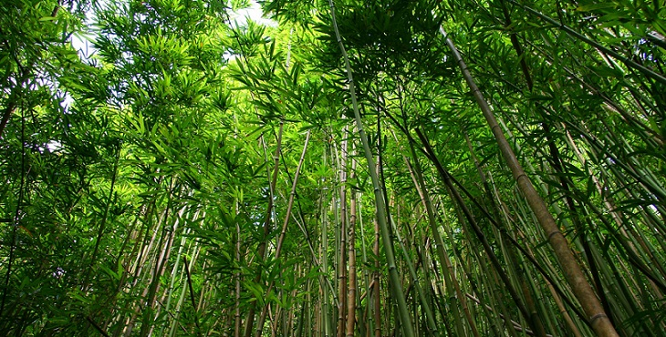 Image of a serene and green bamboo forest. Blessings For Learning To Become One's Own Protector