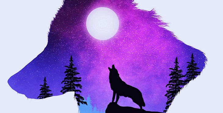 Awesome image of a wolf that howls at the moon. The Wolf That Howls At The Moon