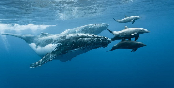 Image of the whales and dolphins swimming peacefully. Global Peace - Being Responsible For One's Ancestry