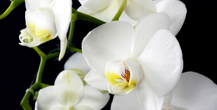 Image of gorgeous white flowers with yellow core. Shaktar Twin Flame Lore #3